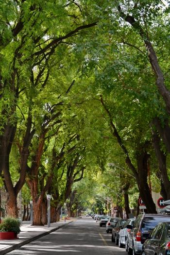 Mendoza _12.JPG