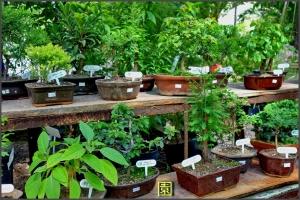 jardin japones buenos aires_19.JPG