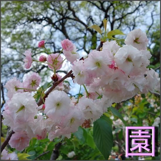 jardin japones buenos aires_01.jpg