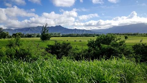 kauai 31.jpg