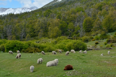 route 7 lacs argentine 13.JPG