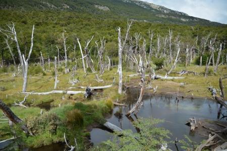 parc national de la Terre de Feu 06.JPG