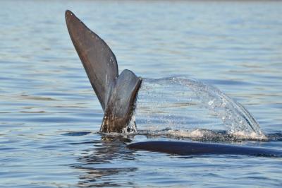 baleines franches valdes_12.jpg