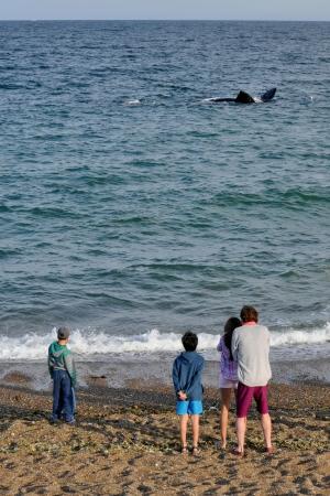 baleines franches valdes_06.JPG