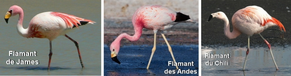 flamants.jpg