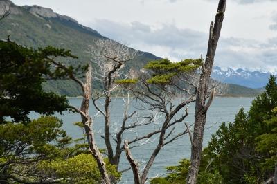 parc national de la Terre de Feu 14.JPG