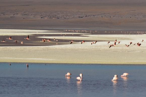 laguna colorada 15.jpg